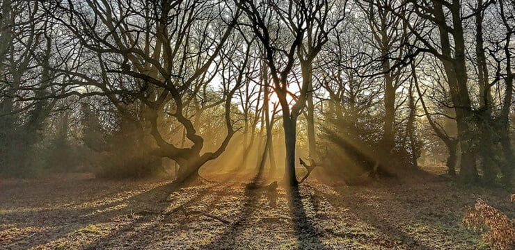 Friends of Barnes Common - Sunrise in the Mist by Andrew Wilson